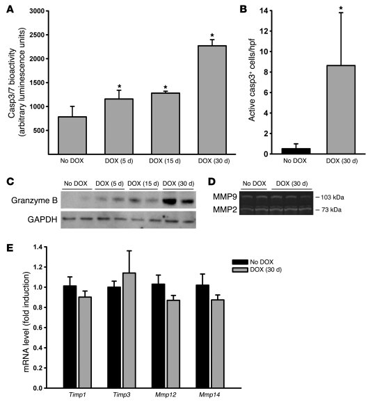 In Raet1a Tg mice, inducible expression of RAET1 on pulmonary epithelial...