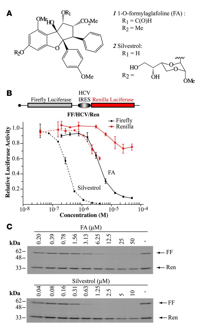 CBFs inhibit cap-dependent translation. (A) Chemical structure of FA and...
