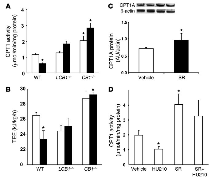 CB1 receptor regulation of hepatic fatty acid oxidation.     (A) Effect ...