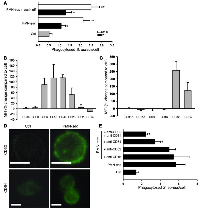 PMN-sec enhances activation of macrophages and expression of FcγRs.     ...