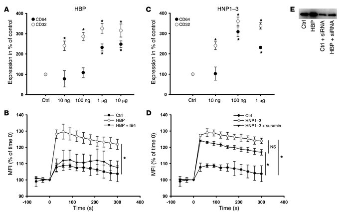 Characterization of the enhanced phagocytosis by HBP and HNP1–3. (A and ...
