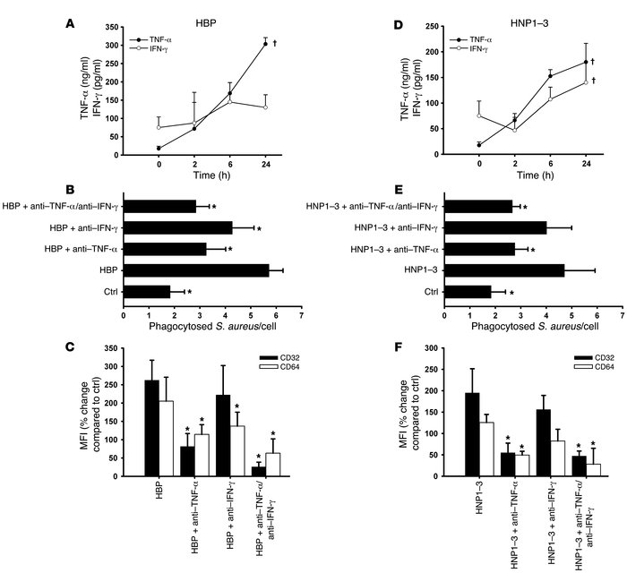 Involvement of TNF-α and IFN-γ in the HBP- and HNP1–3–mediated enhanced ...