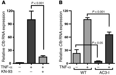 TNF-α–mediated Cfb expression is regulated by CaMKII.     (A) Neonatal c...