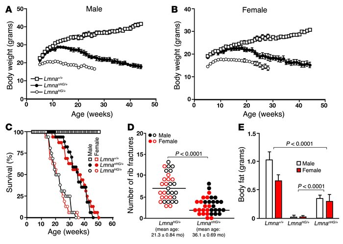 Phenotypes of LmnanHG/+ mice.     (A) Body weight curves of male LmnanHG...