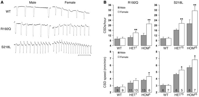 Enhanced CSD susceptibility in FHM1 mutant mice. (A) Representative elec...