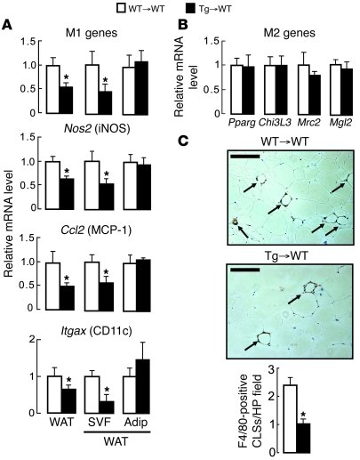 Transplantation of aP2-Dgat1 BM is sufficient to protect mice against di...