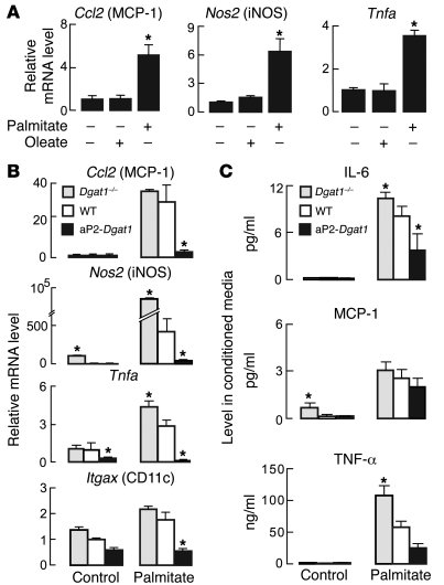 DGAT1 expression levels modulate M1-type activation of BMD-Mϕ by palmita...