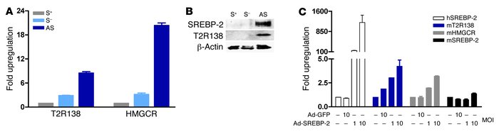 SREBP-2 induces T2R138 expression in STC-1 cells. STC-1 cells were plate...