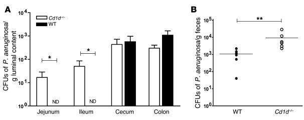 Colonization of the small intestine of Cd1d–/– SPF C57BL/6 mice, 12 hour...