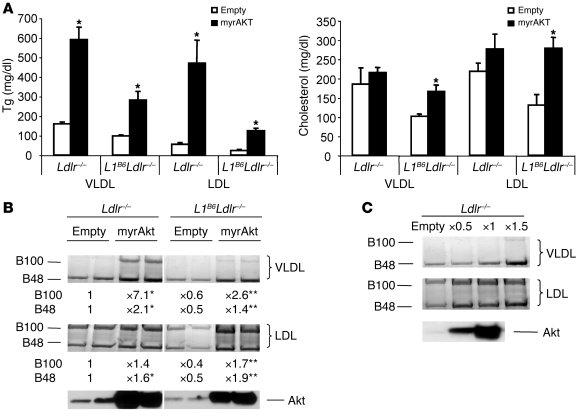 Plasma lipoprotein lipid and apoB levels in WTD-fed mice injected with m...