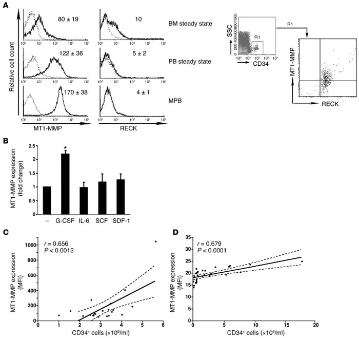 MT1-MMP expression positively correlates with egress and G-CSF mobilizat...