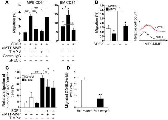 MT1-MMP and RECK oppositely affect in vitro motility of human and murine...