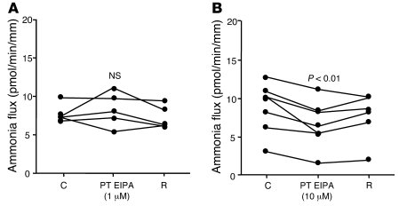 Effect of peritubular EIPA on transepithelial ammonia absorption in the ...