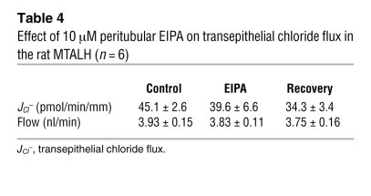 Effect of 10 μM peritubular EIPA on transepithelial chloride flux in the...