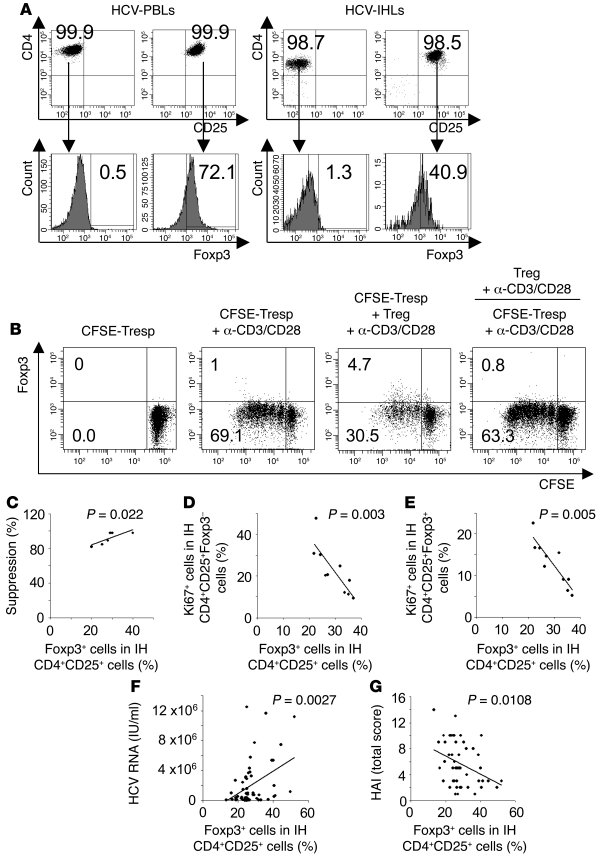 Intrahepatic Foxp3+ Tregs are related to suppression function and diseas...