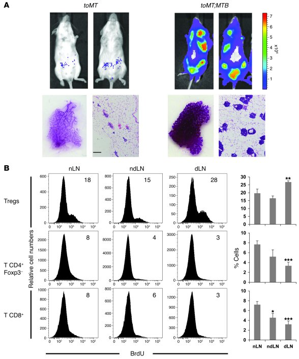 T cell response in mice developing mammary tumors after doxycycline-medi...