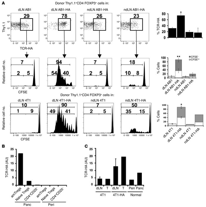 Early accumulation of proliferating Tregs in dLNs is antigen driven and ...