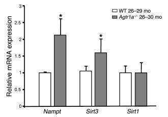 Lack of AT1A is associated with increased levels of Nampt and Sirt3 in t...