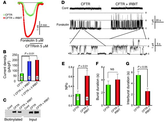 IRBIT activates CFTR. (A) The Cl– current in HEK cells transfected with ...