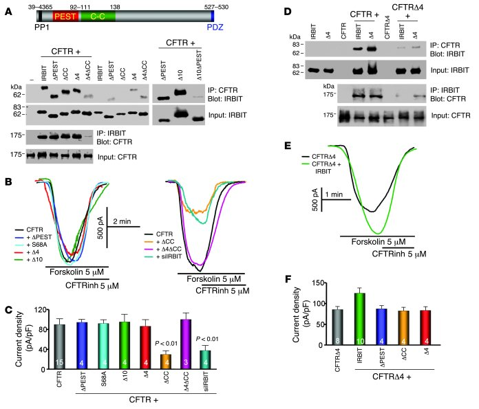 Role of IRBIT domains in interaction with and activation of CFTR. (A) A ...