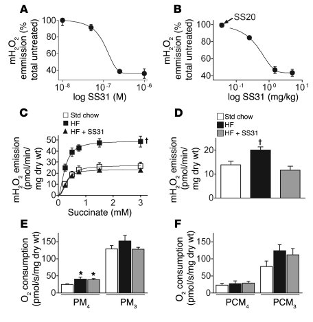 The mitochondrial-targeted antioxidant SS31 prevents the increase in mit...