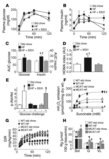 Mitochondrial-targeted scavenging of H2O2 prevents high-fat diet–induced...