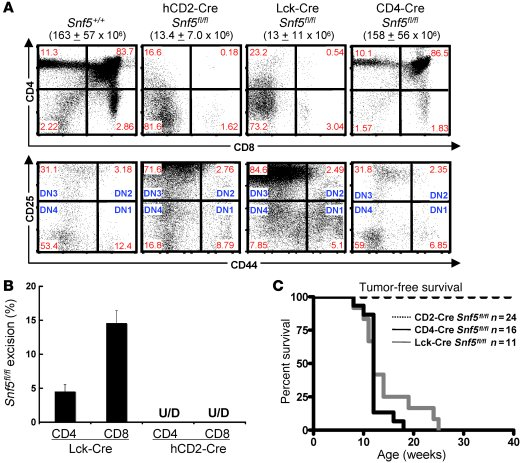 Deletion of Snf5 in T cells results in mature T cell lymphoma. (A) Flow ...