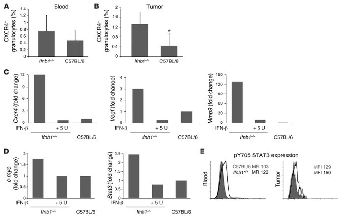 Altered characteristics of CD11b+Gr1+ neutrophils isolated from Ifnb1–/–...