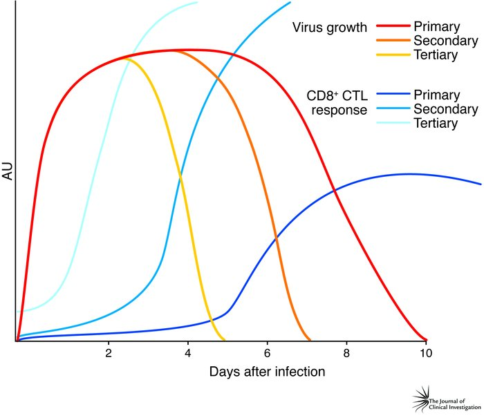 The CTL response to influenza A virus infection. Influenza A viruses rap...