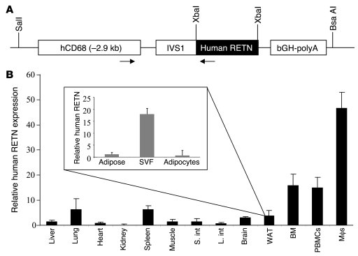 Derivation and initial characterization of humanized resistin mice. (A) ...