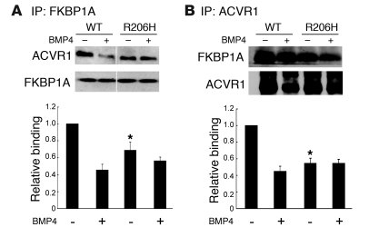 Reduced binding of FKBP12 to mutant ACVR1. COS-7 cells were cotransfecte...