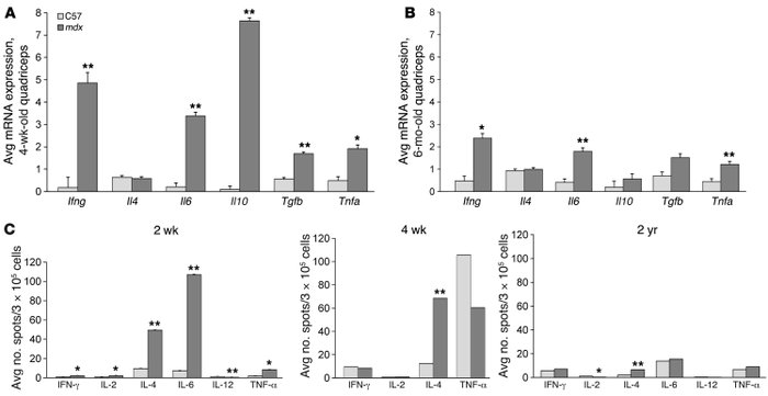 Characterization of inflammatory cytokines in mdx muscle and spleen.    ...