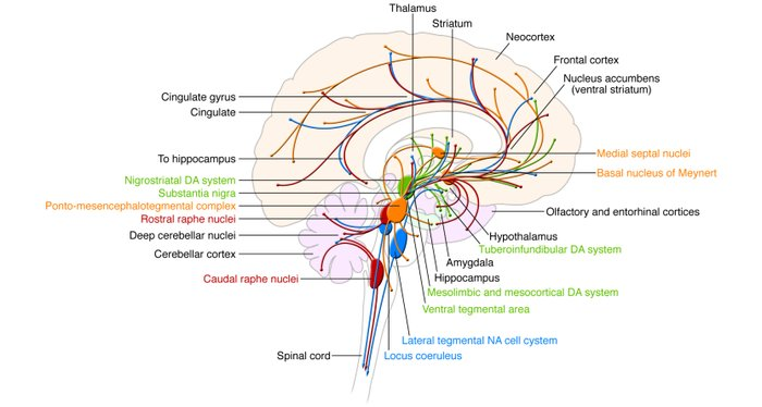 Locations of the monoaminergic nuclei within the brain as well as the   ...