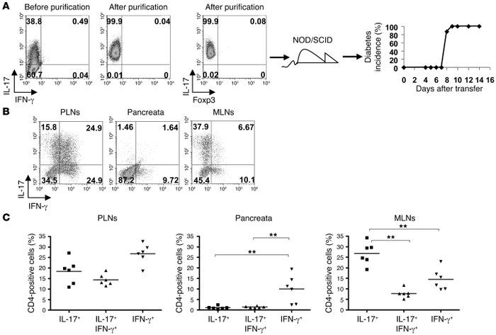 Purified Th17 T cells convert in vivo. (A) FACS plots of tetramer staini...