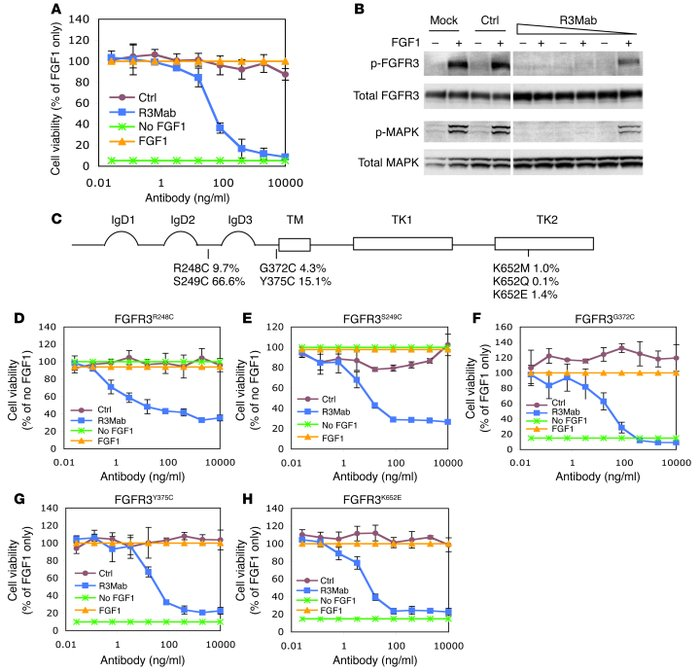 R3Mab inhibits Ba/F3 cell proliferation driven by WT and mutated FGFR3. ...