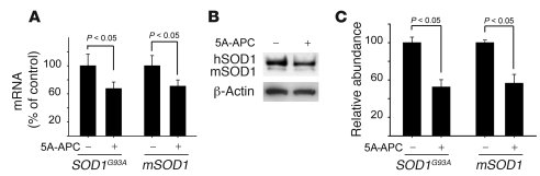 5A-APC transcriptionally downregulates SOD1 expression in spinal cord mo...
