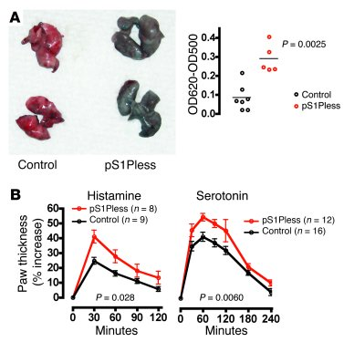 pS1Pless mice exhibit basal vascular leak and increased local response t...