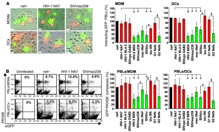 Nef alleles that downmodulate TCR-CD3 impair the ability of virally inf...