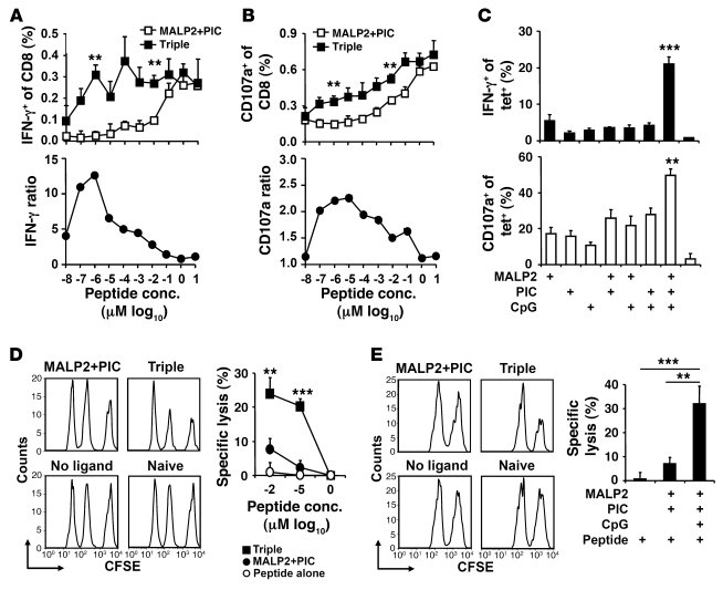 The triple-TLR ligands induce high–functional avidity CD8+ T cells.     ...