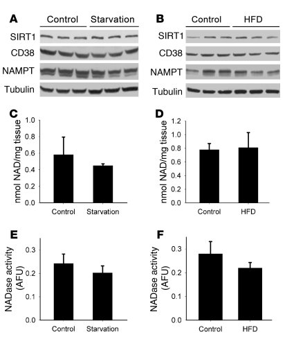 SIRT1 protein levels and NAD+ do not change in the mouse liver in respon...