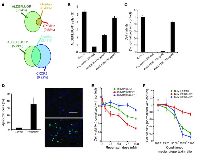 Effect of CXCR1 blockade on cell viability and on the ALDEFLUOR+ populat...