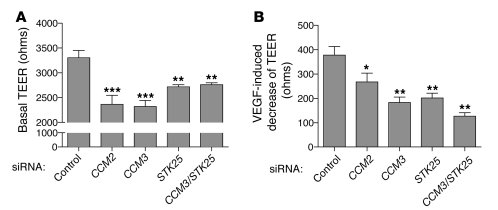 CCM3 and STKs regulate endothelial junctions. (A) Basal TEER was measure...