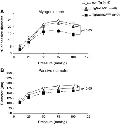 Altered mechanical properties and myogenic responses in young TgNotch3R1...