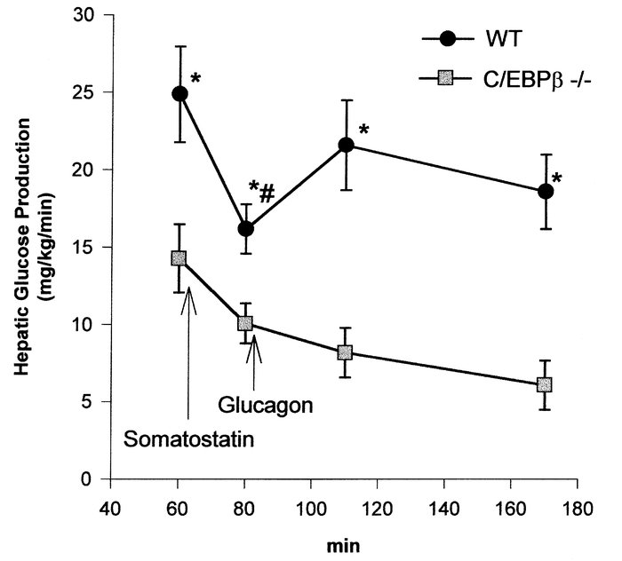 Decreased hepatic glucose production and glucagon resistance in adult mi...