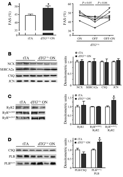 I-1c enhances basal contractility and is associated with higher phosphor...