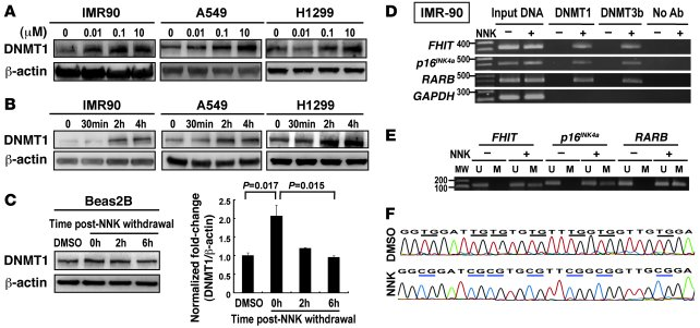 NNK-induced DNMT1 protein binds to promoters and results in hypermethyla...