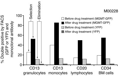Multilineage MGMTP140K-mediated in vivo selection.     Bar graph represe...