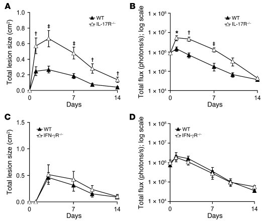 IL-17R–deficient mice, but not IFN-γR–deficient mice, develop increased ...