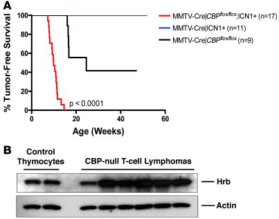 Notch activation cooperates with CBP loss to accelerate lymphomagenesis....