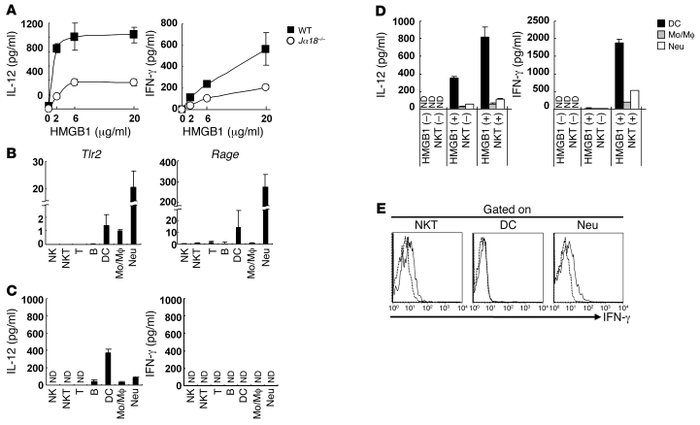 NKT cell–dependent IL-12 and IFN-γ production by liver MNCs in response ...
